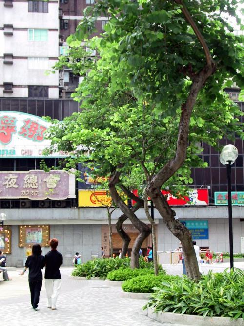 新文華中心前広場の樹木。<br />ダンシングフラワーみたいにぐにゃぐにゃ。