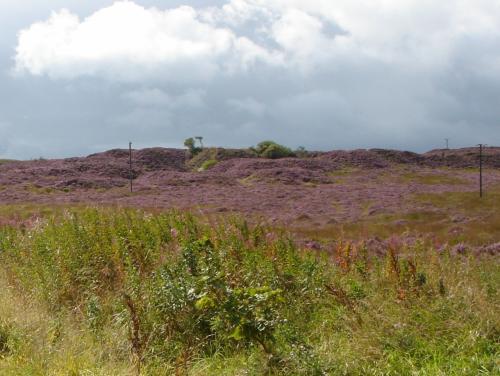 嵐が丘の舞台になったペニストンヒルです。<br />後ろに見える濃いピンク色に咲いているのがヘザーの花です。
