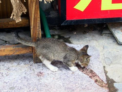小猫ちゃんです。<br />コーラかファンタを舐めています。<br /><br />急に現れたのでお愛嬌にパチリ!