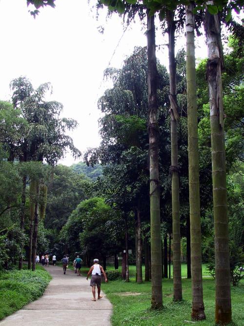 椰子のような木々は、