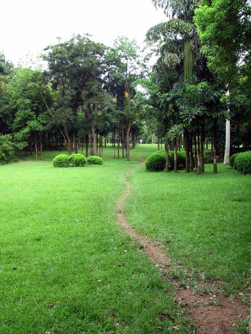 芝生の敷き詰められた庭園部分。