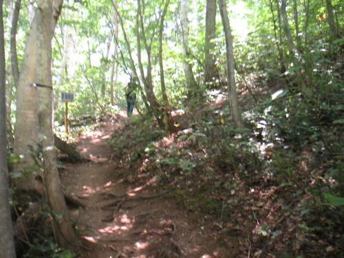 階段を登って林のなかに入ると直ぐ、道が二股に分かれているところがあります。真ん中に順路と書かれた看板が立っていて、順路は右の道を指しています。順路通り進むとヤナギラン群生地斜面の上側に出ます。なので道は、登り坂です。左の道に進むと、群生地斜面下側にでます。周遊道になっているので、道はつながっています。<br /><br />私たちは順路にそって上側にいきました。お散歩程度レベルの私でも問題なく登れます。でもちょっと気合をいれました。入口で借りてきた傘が杖代わりに大活躍しました(^^)v<br />林なので、木陰で涼しく、プチ森林浴を楽しめます。気持ちよかったです。