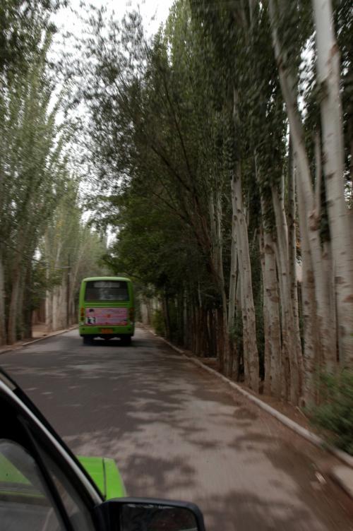 暫くすると、新疆ポプラ並木が連なる道へと入った。<br />前を路線バスが併走する。<br />