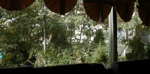 ロビーからの風景。<br />さっきの豆の木(豆が生っている)だ。<br /><br />準備も整い、ホテルを11時に出発。