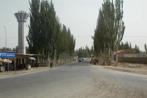 何処へ行っても、すっくと立っている新疆ポプラの並木。