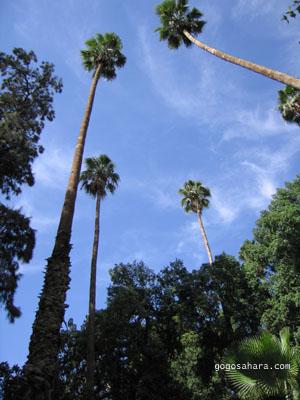 フナ広場近くの公園で見上げた空