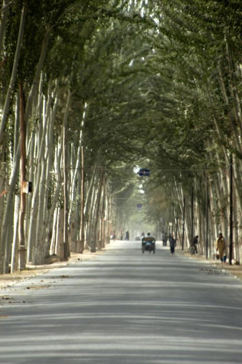 暫く続く長い長い新疆ポプラのトンネルは、真っ直ぐな道も相俟って、口では言い表せない独特な感激がある。<br />フラッシュのように、途切れ途切れに差し込む光、背の高い自然木のアーケード。