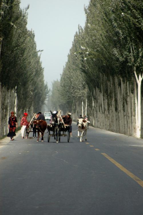 馬、牛、驢馬の3兄弟?<br /> <br />郊外の村に来た方が、道が綺麗になっている。<br />莎車町内から外れたばかりの道は、自然道にアスファルトが浸みているだけだった。