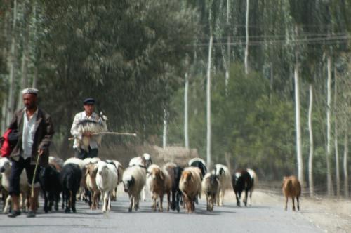 言うことを聞かない羊が居て、にいちゃんは咄嗟にそいつを抱っこした!!<br />こま、ちょっとびっくり!(^^;