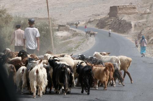 おお、今度は山羊の群れと遭遇。
