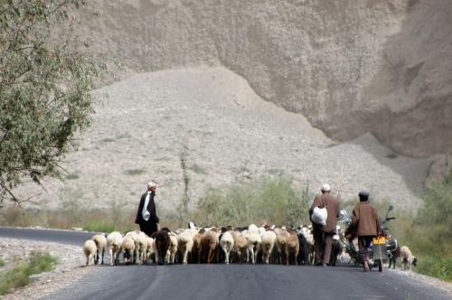 あいやぁ・・・<br />前方に棉羊の群れ発見!<br />横に帯になって歩いている。<br />しかも道路を丸ごと塞いでいるし・・・(@@;<br />