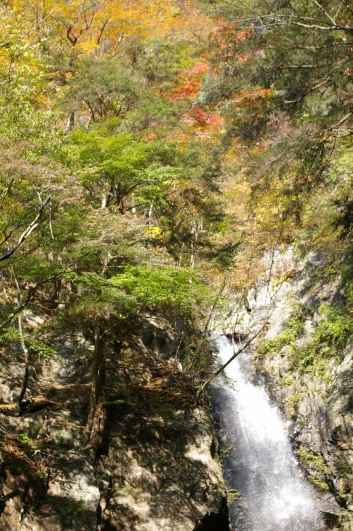 滝の一番上の方はきれいに紅葉していました。