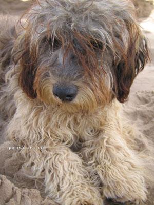 ビーチにいた犬。<br />
