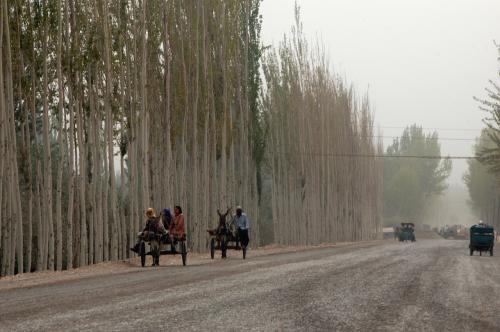 驢馬車も、全て維吾爾人ばかりの光景。<br />我々漢民族(こまとクニクニは、見た目同じようなもの)は、逆に目立つような気がして・・・