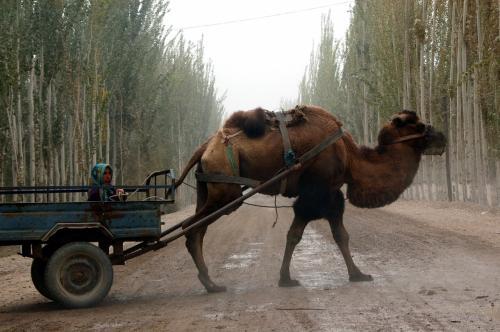 大きな駱駝車が横切るので、少し待った。。。(^^;