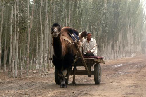 おお!でっかい駱駝。。。<br />おじさんきっと楽だろうな・・。(*o☆)\バキッ!(寒いシャレ言ってんじゃないの!)<br />