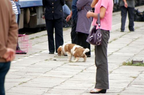 何かと思えば、ヨーゼフみたいな犬(セントバーナード)の子供だった。<br />貨物車に積まれた乗客の犬らしく、出して運動させて貰っていた。良く許可してくれたもんだ。