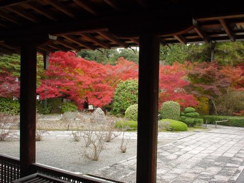 西芳寺(苔寺)です。本堂から庭園を眺めたところ。