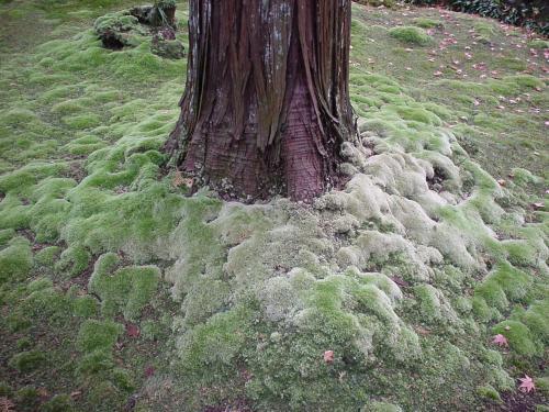 こんな凄い苔って見たことなかったです。
