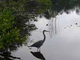 水鳥の種類の多さに驚く。さぎだって近くに来てもこの通り。「本物?剥製じゃないの?」と言ったとたんに飛び立った。