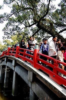 心字池にかかる太鼓橋。<br /><br />漢字の「心」の字を象った池にかかる御神橋は、太鼓橋、平橋、太鼓橋の三橋で、手前から過去・現在・未来を現し、三世一念の仏教思想を残したものと伝わるそうです。