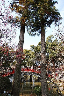 菖蒲池のほとりから、心字池にかかった太鼓橋を見たところ。<br />ひょろーりと長い杉の木が2本伸びています。