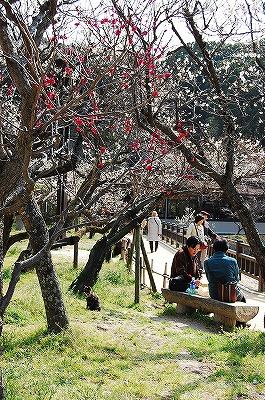 梅の木の下でお花見弁当をしている女性2人と、その左手に猫が1匹。<br /><br />猫もこんな日は気持ちいいだろうなー。<br />お花見してるのかな?