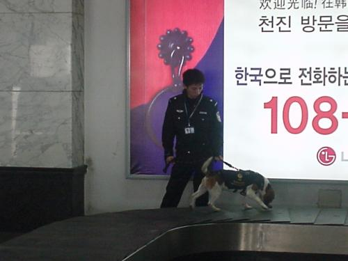天津空港に着きました! バゲージクレームで荷物が出てくるのを待っていると、麻薬犬が出てきました。