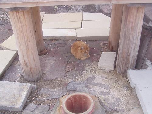 なんの穴かな?と思ったら、これは「温泉たまご」を作る穴なんだそうです。<br />たまごをこの穴でる噴気にあてて熱して温泉たまごにするそうです。<br />まだ朝なのでたまごは売ってませんでしたので食べれませんでした。