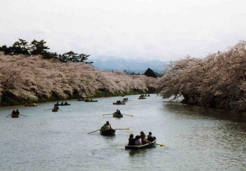弘前公園。<br />ボートに乗っている人がたくさん。