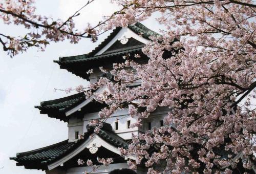 弘前城。<br />素晴らしい景色ですねー。