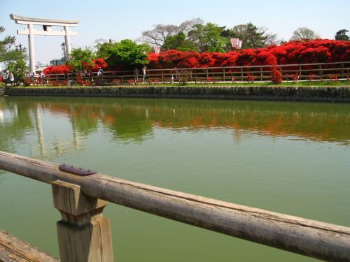 水上橋から眺める<br />中堤のキリシマツツジ