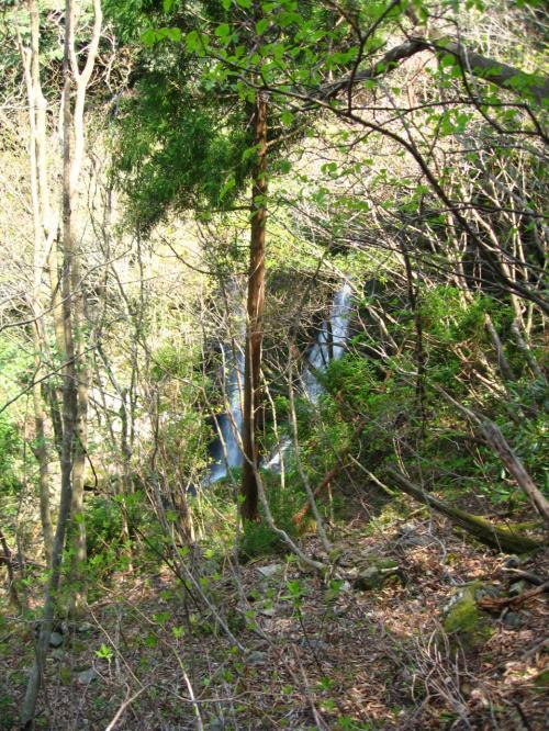 明王橋から左手に進むと<br />ゴーッと滝音が聞こえて<br />木立の隙間から<br />滝の流れが見えて来ました。
