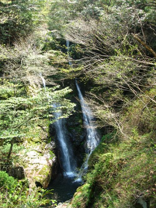 おぉ、二筋の落差35mの夫婦滝が!!<br /><br />見ごたえのある滝<br />ですが滝見台から眺めるだけで<br />危険なので滝つぼ近くには行けません。<br /><br />