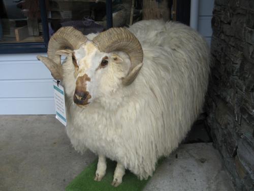 アロータウンの店前に飾られていた羊さん