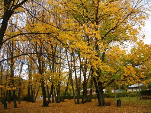 ワナカで黄葉が見られなかったので<br />アロータウンの秋の彩りが嬉しい<br />