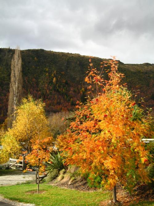 秋を彩る木々
