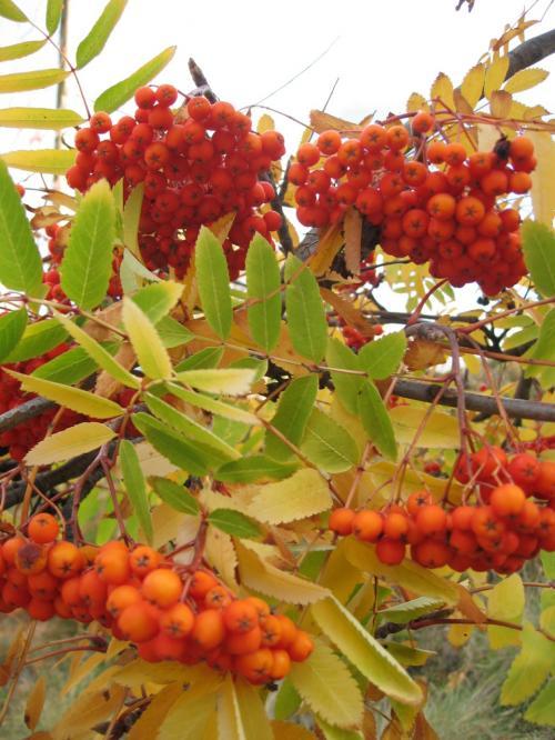 沢山の赤い実をつけた木<br /><br />来た道を戻る事に〜