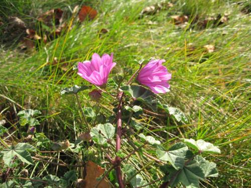 ヘイズ湖畔で見た可愛い花