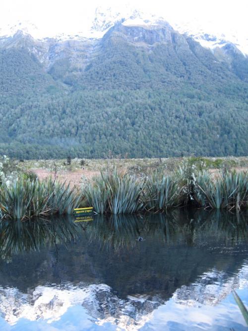 ミラーレイク<br />逆さ看板が湖面に映るポイント<br /><br />スイスイと鴨が泳いで来て<br />モデルになってくれました。