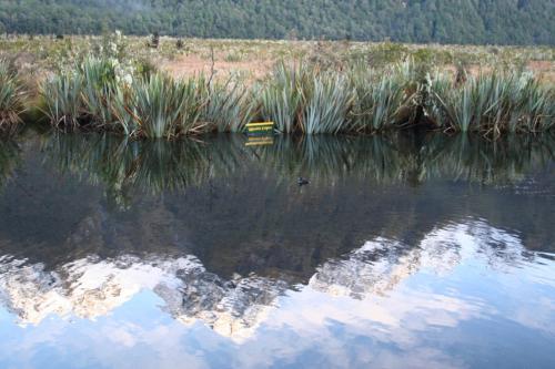 ミラーレイク<br />逆さ看板と鴨をアップで<br /><br />如何ですか<br /><br />mirror lakeの文字と<br />美しい雪山<br />が<br />クッキリと映し出されています。