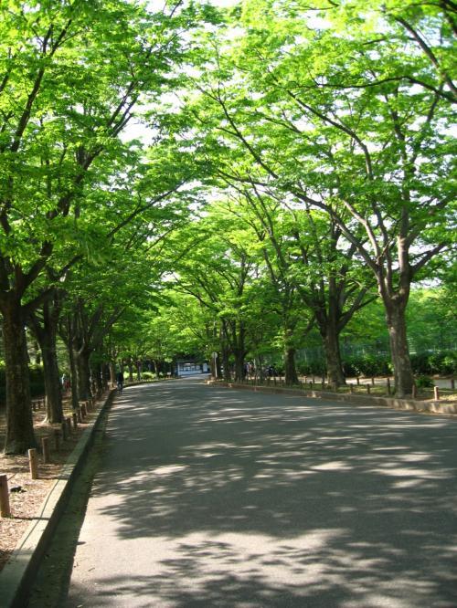 新緑が眩しい<br />植物園到着で〜す。<br />