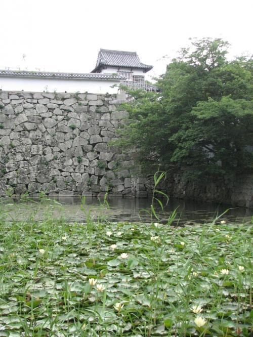 潮見櫓と睡蓮