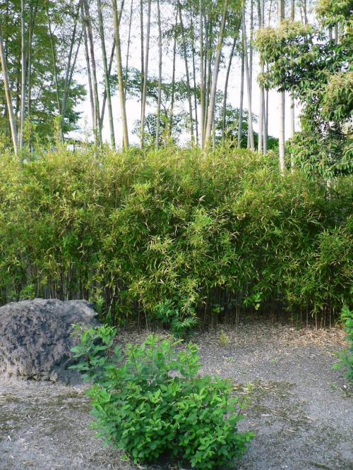 松花堂(しょうかどう)の庭園。