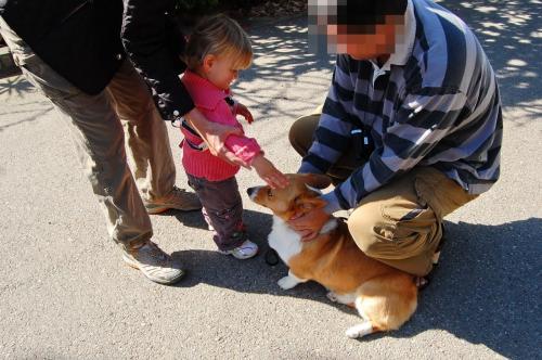 《 お散歩 》<br /><br />初めの頃はよくドッグシッターだと思われて料金を尋ねられましたが、だんだんご近所にも住民だと認知され声をかけてくれるようになります。犬連れは地域に馴染むのにもお得かも。