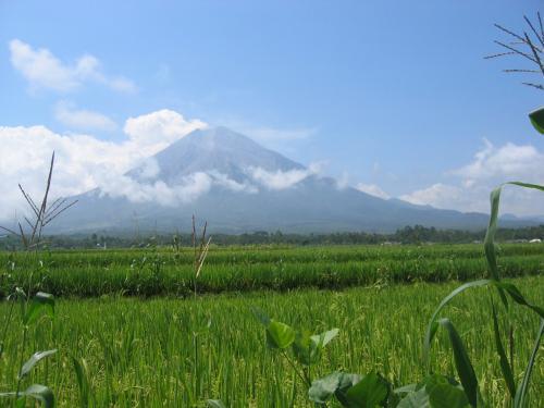 富士山?Maumere山