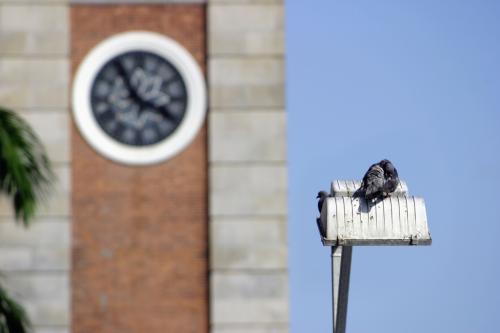 鍾楼前面的路灯上有両只鴿子歇歇。<br />(鐘楼前の街頭の上で、2羽の鳩がお休み)