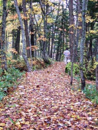 滝の下流へ行く遊歩道です。<br />落ち葉が敷き詰められ、ホワホワした感じがとても気持ちよいです。