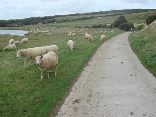 本当にたくさんの羊をみました。生まれて初めてかもしれません(笑)