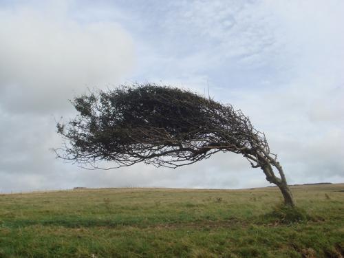 波風で曲がっている木。写真右が海方面ですね。ホラー映画とかに出てきそうな感じがしました。